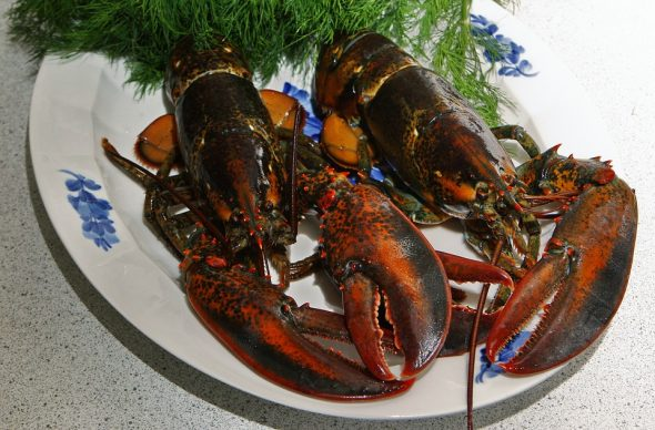 Try Seafood As The Main Dish For This Year's Christmas Feast