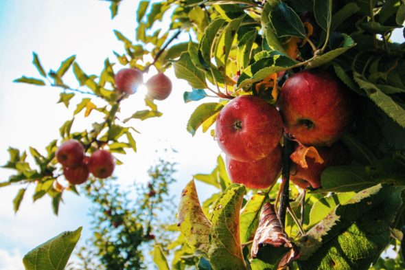 Combating our growing Food Needs